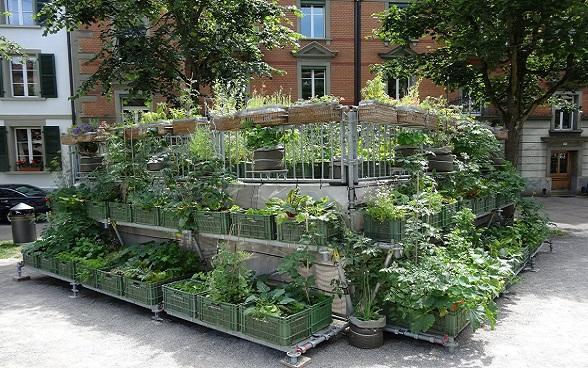 Urban Gardening, Breitenrain Quartier, Stadt Bern